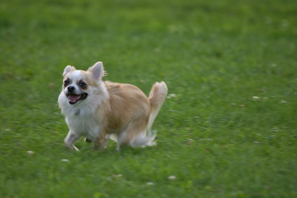 eeeeeeeeeee, reactive dog