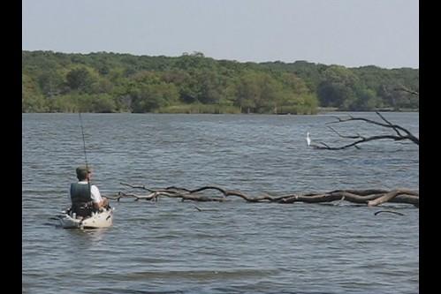 V I D E O --  Busse Woods / Busse Lake -- Hobie Kayak / Kayaker & Egret -- Fishing -- Video B