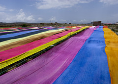 Qat fields protected from the sun with giant colourful sheets - Yemen (Eric Lafforgue) Tags: field kat arabic arabia drug yemen agriculture champ qat yemeni yaman 0418 drogue jemen arabiafelix  arabieheureuse  arabianpeninsula   colorphotoaward  imen  jemenas