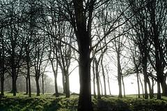 the shining (only alice) Tags: morning trees winter light sky sun sunlight sunshine december walk onlyalice