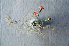 flowers (chrrristine) Tags: nyc pink flowers white grey gray salmon porcelain