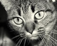 Bia ([LiaLua] [DGNeves]) Tags: bw home cat canon pb gato gata bia 400d eosdigitalrebelxti canon400d canoneos400ddigital eoskissx friendlychallenges lialua