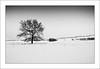 Winter (MaddixLuxx) Tags: trees winter sun snow black cold nikon whitewinter ashowoff
