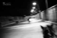 Mirage.. (SonOfJordan) Tags: street light shadow blackandwhite bw horse motion blur speed canon eos blackwhite movement mood noiretblanc action bokeh egypt mirage conceptual luxor xsi 450d samawi sonofjordan wwwshadisamawicom