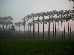 Amanhecer no Parque da Cidade (Paulo Roberto de Souza) Tags: neblina amanhecer parquedacidade suavidade chalengegroup