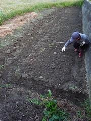 鳳林自然農田 川口由一自然農法的秧田 稻子育苗- 除草&整平苗床