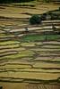India  402 (adam rumbold) Tags: india holiday madikeri rainforestretreat