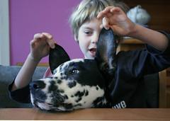 One long morning (Barbara K*) Tags: friends boy dog playing kitchen spot inside february noa 2010 blackandwhitedog coldday dalmatiner dalmatien