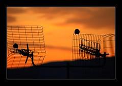 Parejas (depu1056) Tags: pink houses sea espaa beach water mar town spain agua pueblo playa amanecer pajaros casas rosas sombras siluetas ria cantabria azules sanvicentedelabarquera