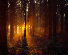 Sunset Trees (mattneighbour) Tags: uk trees sunset tree 120 mamiya film mediumformat iso800 kodak norfolk f4 goldenlight 80mm portra800 c41 c330 v700 c330s epsonv700 endframe homeprocessed cropped6x6 mneighbour idontneedalabmuhahahaha fujihuntc41
