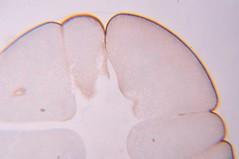 DSC_0536 (John Aho) Tags: microscopy hiddenworld nikond90 lietzmicroscope