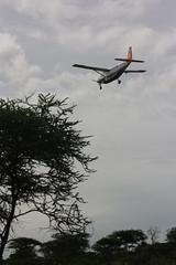 Safari (Jesse van Elteren) Tags: tanzania serengeti bigfive ngorogoro