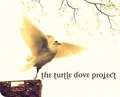 turtle+dove+logo