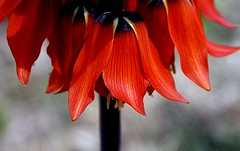laleh flowers (4)