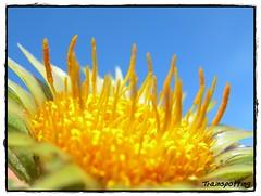 Flower Macro ( Compacta + Close Up ) (Trainspotting ML) Tags: park flowers parque espaa flores flower macro primavera up gardens closeup fauna garden lens spring spain flora