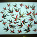 swallows_8x10