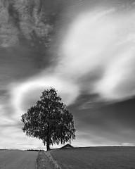 FujiFilm Monochrome #1 (Krogen) Tags: summer bw june norway juni landscape norge blackwhite sommer norwegen noruega scandinavia akershus romerike krogen landskap noorwegen noreg borgen ullensaker skandinavia svarthvitt svhv silverefexpro fujifilmx100