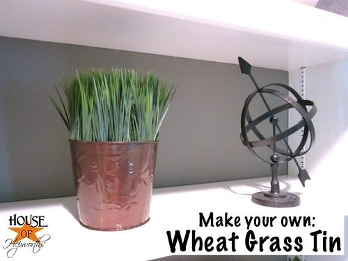 wheat_grass_dollar_store_02