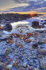 Acadia Seawall Tidepools Sunrise (HDR) (Knowsphotos) Tags: seaweed sunrise seawall tidepools hdr acadia acadianationalpark thisphotorocks 2009roadtrip knowsphotos