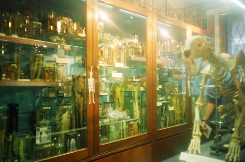 grants museum of zoology