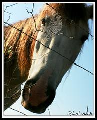 lensbaby_horse_spiderweb