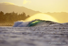 Gold Curl (Sean Davey Photography) Tags: pictures usa color green nature horizontal gold hawaii golden energy colorful warm power bright oahu tube barrel wave sunny alternativeenergy northshore curl tubing pipeline curling greenglow goldenlight greenenergy greenpower oceanwave seawave alternativepower oceanswell seandavey oceanpower barreling seaswell curlingwave pipelinenorthshoreoahu wavesenergy seawaveenergy oceanenergy oceanwavepictures seandaveyphotography seandaveyfineart