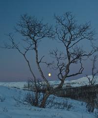 Moon (knutmsa) Tags: blue trees winter sunset moon mountain snow mountains nature norway nikon natur arctic nikkor troms 5014 winterscene nikkors northernnorway nikkors50mmf14 d700 nikkors5014