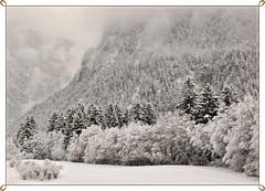 Happy Holidays (ceca67) Tags: winter white snow cold switzerland nikon frost mount sensational dezember albula impression tistheseason d90 ceca mywinners alvaneu theunforgettablepictures daarklands finestimages flickrvault trolledproud