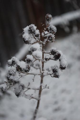 358/365: White Christmas