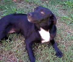 La Negra leia (HOGAR CANINO ARECO de GRACIELA VELEZ) Tags: san canino antonio graciela hogar velez areco blitto