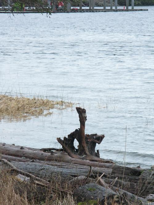 high tide, Kasaan, Alaska