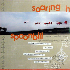 spoonbill(L)
