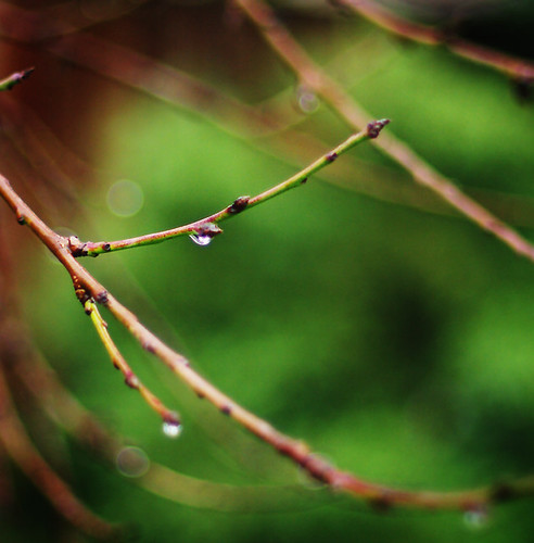Jewelled Branches (6/365)