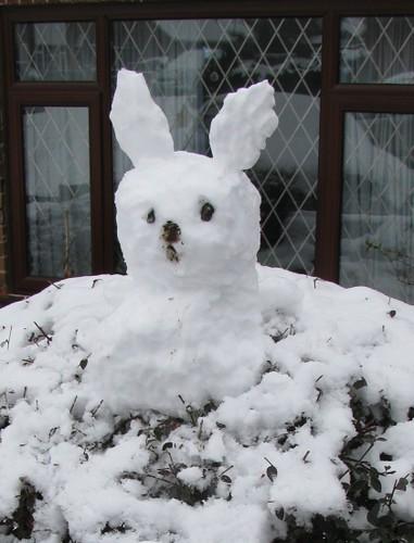 Snow bunny in a bush
