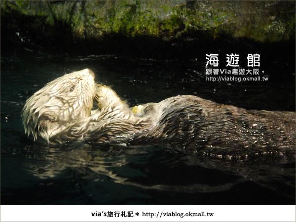 【via關西冬遊記】世界最大極的水族館~大阪海遊館10