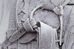 Horses (Horacio Rodriguez V-.-.-.-Yazzata) Tags: horses horse animal mexico caballos libertad cadenas animales toluca riendas morelos fiel nobleza edomex zempoala balnco cuaco