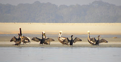17 Pelican and Cormorant Square Dance (Glass Bead Game Master) Tags: sunrise easter kayak paddle charles kayaking davidt
