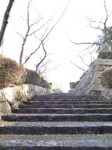大竹 亀居公園 桜 画像 22