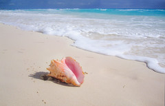 Queen Conch, Cancun Mexico (Simon__X) Tags: ocean travel cruise flowers blue sea vacation sky panorama su