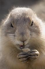 it tastes good! (Foto-dag) Tags: brown cute netherlands animal canon mammal zoo eyes rot