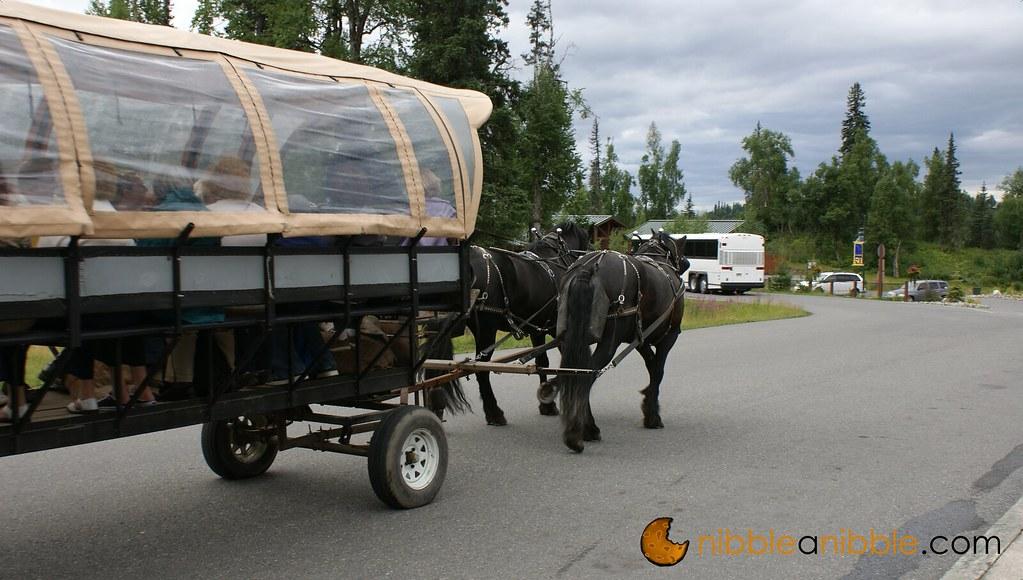Lodge Horses