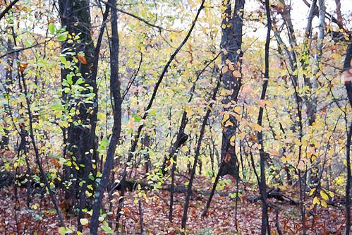 monet woods 2