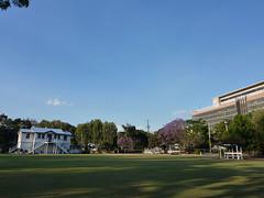 Jacaranda Green, 81/365