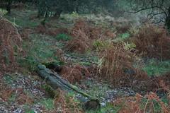 IMG_6046 (creggane_ireland) Tags: cowicklow djoucewoodandglendalough