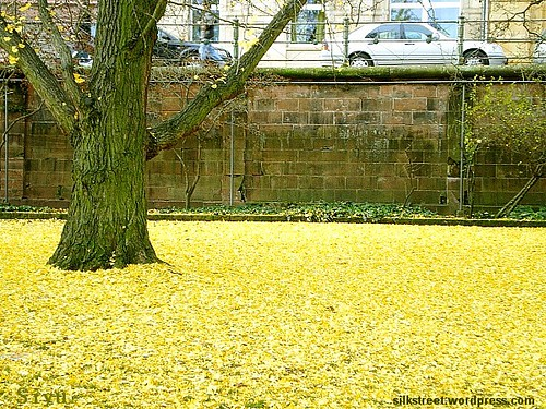 November Herbst-Laub