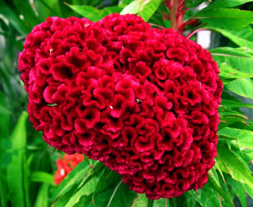 brainy flower