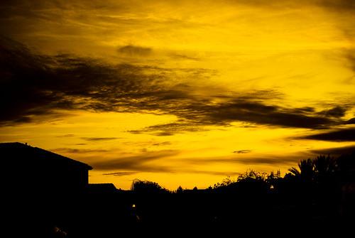 Yellow Nights.