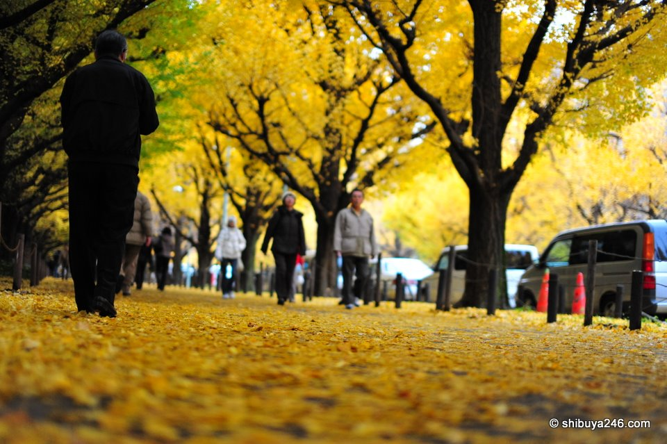 The pavement formed a carpet of yellow leaves.