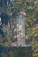 Busy Winter Day at the Bird Feeder 2