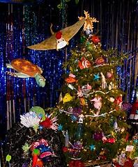 Hawaii_Christmas (24) (731photo.com) Tags: christmas holiday hawaii paradise december seasons waikiki oahu photos honolulu greetings 2009 mufihannemann honoluluhale honolulucitylights hawaiichristmas christmasinparadise hawaiiphotos hawaiichristmasphotos 731photocom 731photo gregorymcaleer gregmcaleer731photo christmaswaikiki honoluluholidayphotos2009 hawaiiholidayphotos hawaiiwreaths mayormufi hawaiichristmas2009 melekalikimake christmashawaiiphotos holidayseasonhonolulu december2009honolulu hawaiiphotosdecember2009 christmaswreathshawaii honoluluchristmasphotos